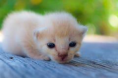 Encontro pequeno do gatinho Foto de Stock