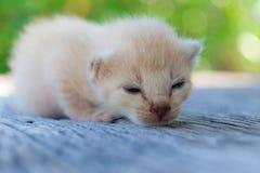 Encontro pequeno do gatinho Fotografia de Stock