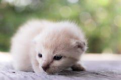 Encontro pequeno do gatinho Fotografia de Stock Royalty Free
