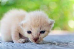 Encontro pequeno do gatinho Fotos de Stock