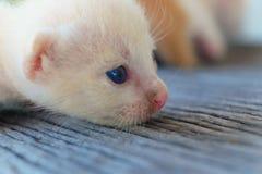 Encontro pequeno do gatinho Foto de Stock Royalty Free