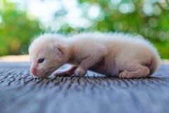 Encontro pequeno do gatinho Imagens de Stock