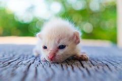 Encontro pequeno do gatinho Imagem de Stock