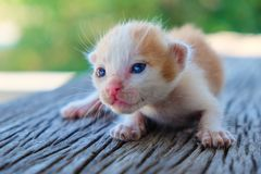 Encontro pequeno do gatinho Fotos de Stock Royalty Free