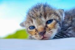 Encontro pequeno do teste padrão do tigre do gatinho Imagens de Stock