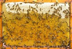 Encorche el marco con las abejas, la miel y el polen Imagenes de archivo