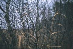 encorvaduras de la hierba del otoño contra el fondo oscuro - mirada de la película del vintage Foto de archivo libre de regalías