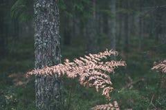 encorvaduras de la hierba del otoño contra el fondo oscuro - mirada de la película del vintage Fotos de archivo