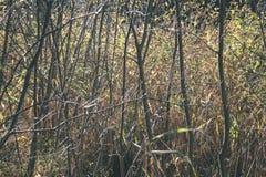encorvaduras de la hierba del otoño contra el fondo oscuro - mirada de la película del vintage Imagen de archivo