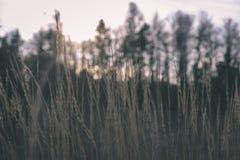 encorvaduras de la hierba del otoño contra el fondo oscuro - mirada de la película del vintage Imágenes de archivo libres de regalías