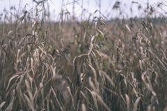 encorvaduras de la hierba del otoño contra el fondo oscuro - mirada de la película del vintage Fotos de archivo libres de regalías