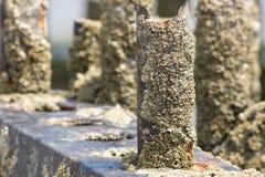 Encrusted щипцами ржавый пах groyne пляжа Щипцы на я Стоковое Фото