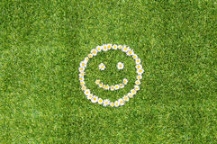 Green grass daisies smile Royalty Free Stock Photography