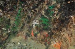 Encrusting liv under bruna havsogräs Arkivbilder