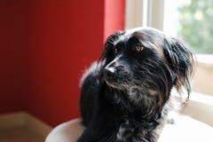 Encuentre a Donna, un perro mestizo, perdido encontrado en un prado en la isla griega de Lesbos Imagen de archivo