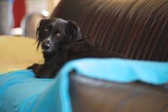 Encuentre a Donna, un perro mestizo, perdido encontrado en un prado en la isla griega de Lesbos Imagen de archivo libre de regalías