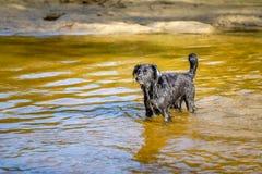 Encuentre a Donna, un perro mestizo, perdido encontrado en un prado en la isla griega de Lesbos Imágenes de archivo libres de regalías