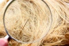 Encuentre una aguja en el haystack Imagen de archivo libre de regalías