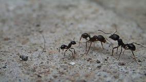 Encuentro de las hormigas