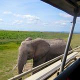Encuentro del elefante imagenes de archivo