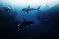 Encuentro del tiburón, escuela grande de los tiburones que patrullan bajo el agua libre illustration