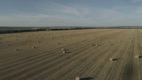 Encuesta aérea de campos agrícolas en otoño del helicóptero metrajes