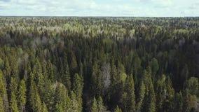Encuesta aérea de la opinión superior del bosque metrajes