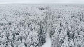 Encuesta aérea del bosque del invierno metrajes