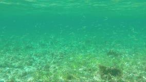 Encuesta subacuática de la multitud grande de pescados almacen de metraje de vídeo