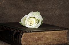 Encyclopedia. An old encyclopedia coverd byb a whyte rose stock images