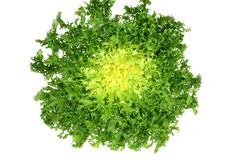 Endívia verde Imagem de Stock Royalty Free