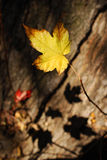 The end of autumn Royalty Free Stock Photo