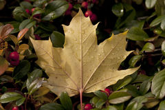End of Autumn. Royalty Free Stock Image