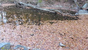End of Autumn in Rock Creek stock video footage