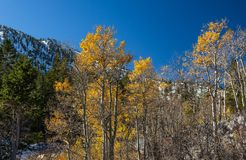 End of the autumn season, winter moves into the mountains royalty free stock images