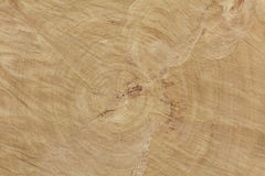 End cut of a big tree texture Stock Photography