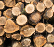 End of cut logs Royalty Free Stock Photography