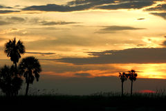 End of Day. Palms at Sunset. Treasure Island Florida royalty free stock image
