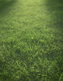 End day lights falling over green grass Stock Photo