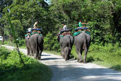 End of the day`s safari. The elephants are going back to their stable. Stock Images