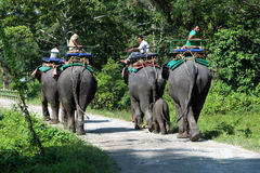 End of the day`s safari. The elephants are going back to their stable. Stock Photography