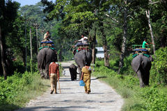 End of the day`s safari. The elephants are going back to their stable. Royalty Free Stock Photos