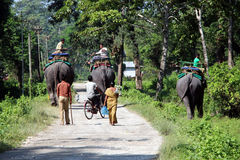 End of the day`s safari. The elephants are going back to their stable. Stock Photo