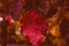 End Of Fall Close UP Royalty Free Stock Photo