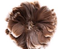 End feather duster close-up Royalty Free Stock Image