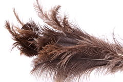 End feather duster Stock Images