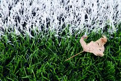 End of football season. Dry leaf on ground of plastic green football turf with painted white line . Royalty Free Stock Photography