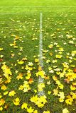End of football season. Dry maple leaves fallen on ground of natural green football turf with painted white line . Stock Image