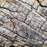 172/365 - End Grain Stock Photography