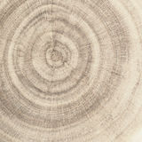 End grain wood. Rings texture stock photo